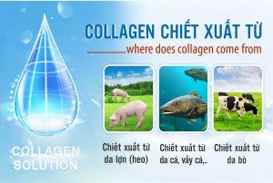 thành-phần-của-collagen